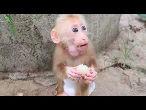 The holiday of the monkey babies