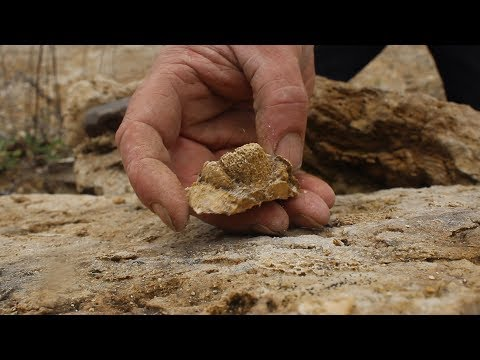 Extracting a Silurian Coral Fossil