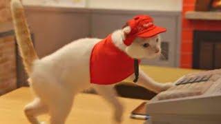 видео Кошки Algonquin Hotel