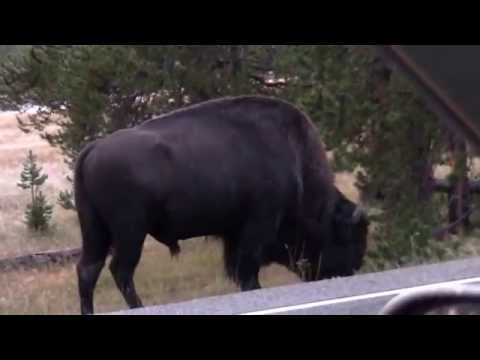 Cross-Country Trip - Part 02 - Yellowstone