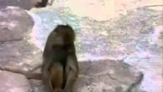 whatsapp funny monkey
