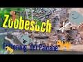 Zoo Köln | Mantelpavian Fütterung | Melis Family Blog   # 023