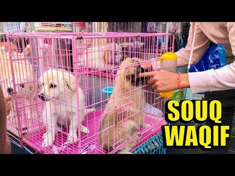 Souq Waqif Doha Qatar Trip and Tour   Sunset Bird Market ( 4K )