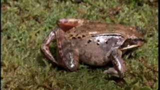 NOVA scienceNOW : 2 - Frozen Frogs