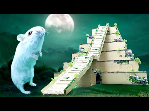 Hamster Finding Treasure in Blue Diamond Temple Maze !! Hamster obstacle course DIY by Life of Pets