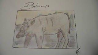 Babirusas draw. from Challenge