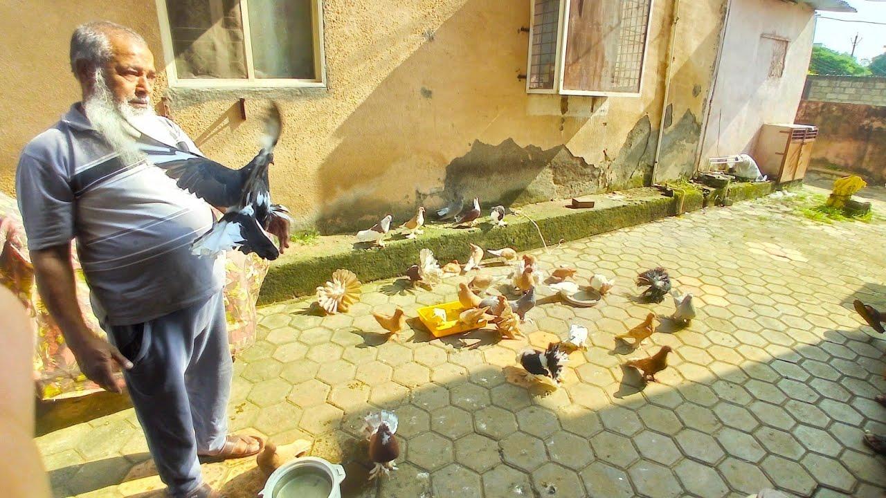 Pigeon in khandwa || Ejaz Chacha ke fancy pigeon || 25yr experience