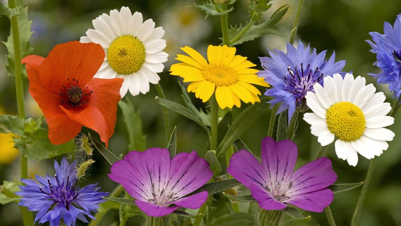 Летние цветы лесные