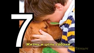 Жизнь и цель собаки | Брюс Кэмерон  7 из 7