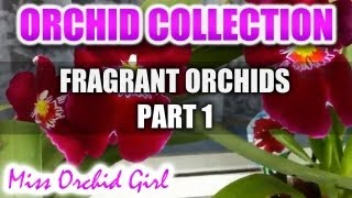 A collection of Fragrant Orchids Part 1 - Varieties, scent description and beautiful flowers!