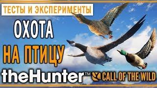 theHunter Call of the Wild #15 🦆 - Охота на Птицу - Кряква, Чирок, Казарка, Каменушка
