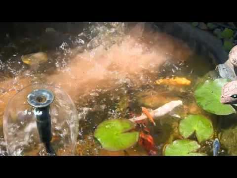 The Garden Gurus - Zeolite in Ponds