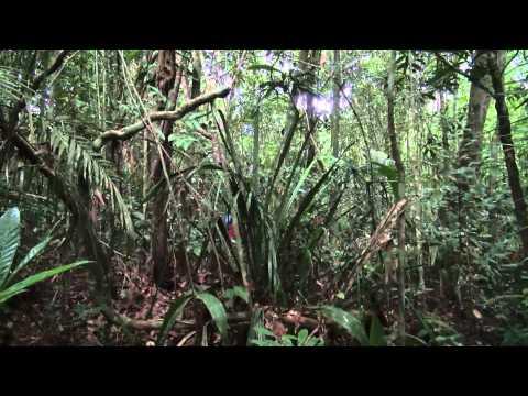 The Amazon Adventure - Into the heart of south america - Hapay-Lloyd Cruises