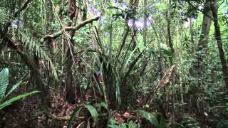 The Amazon Adventure - Into the heart of south america - Hapay-Lloyd Cruises