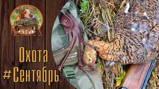 Русский Охотничий Спаниель#Сентябрь на охоте