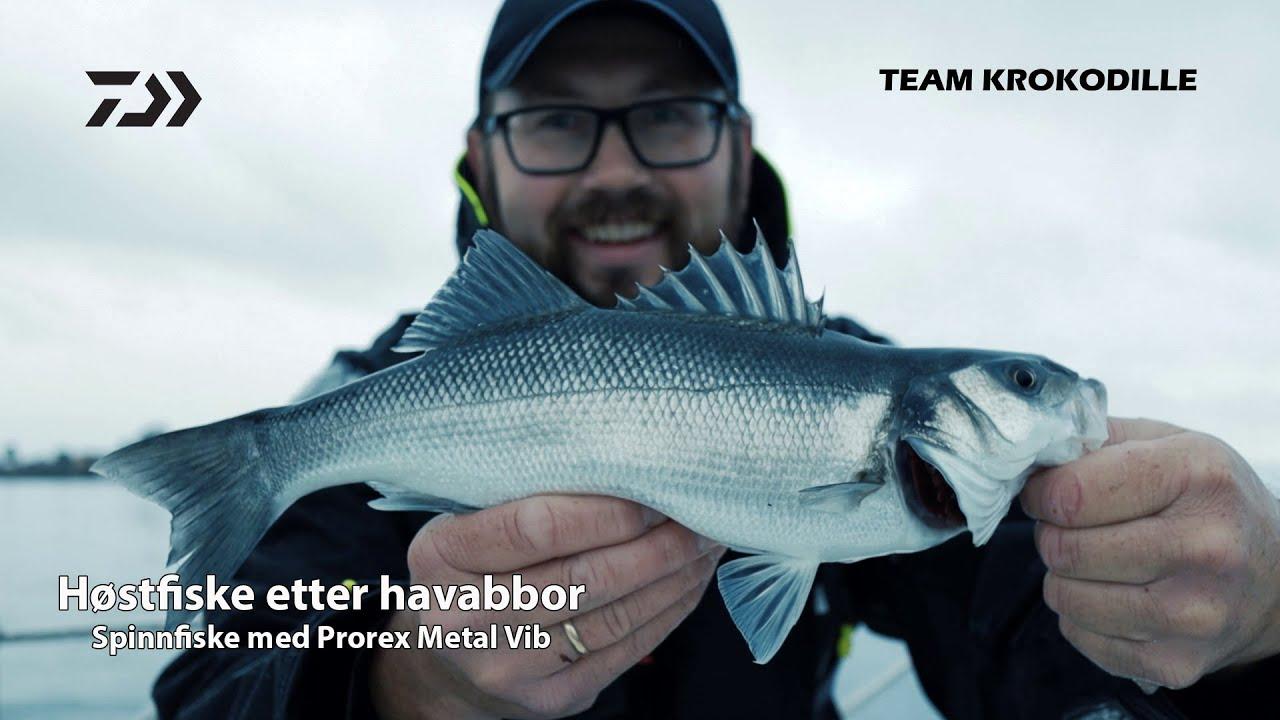 Film - Høstfiske etter havabbor