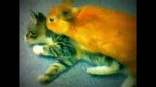 rabbit sex with cat