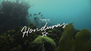 Utila: A Scuba Diving Paradise In Honduras