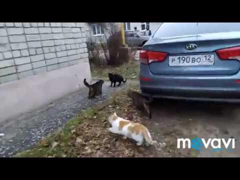 Нападение мышки на стаю собак.