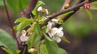 Лучшим садом Московской области может стать яблоневый сад Химок(, 2016-06-08T10:05:51.000Z)