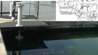 生物浄化の仕組み:安全な水safe drinking waterをつくる緩速ろ過Slow S...