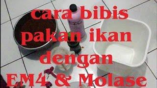 Cara  bibis pakan ikan dengan EM4 & Molase (How to Bibis Fish Feed with EM4 & molasse)