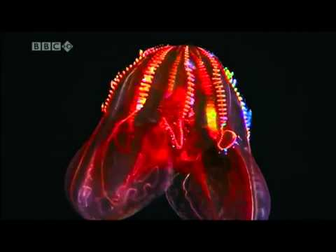 BBC Deep Sea Bioluminescence on Prefuse 73's Digan Lo
