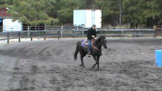 BF Coal Man Barrel Horse For Sale