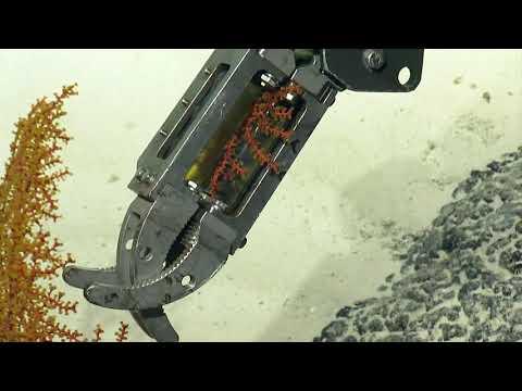 ROV Hercules Dive NA114-H1786-20190904T1832UTC-98