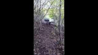 lov i obuka -stenad 7 mjeseci ,kopov, u prvom susretu sa divljim svinjama
