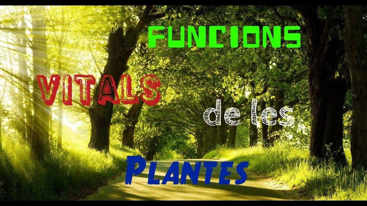 Funcions vitals de les plantes youtube for Les plantes