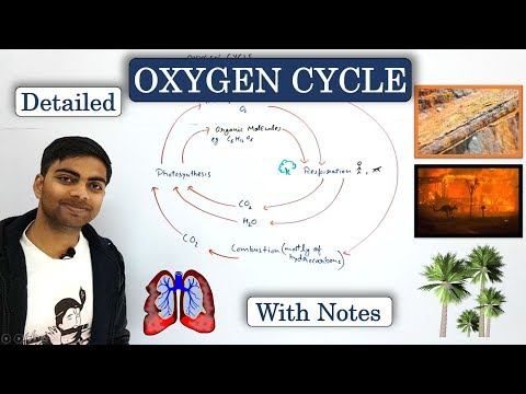 Oxygen Cycle   Detailed Explanation   In Hindi