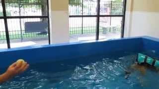 German Shepherd Newlie's First Swimming Lesson