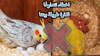 3 معلومات خاطئة يتم تداولها بين مربين طيور  الزينة