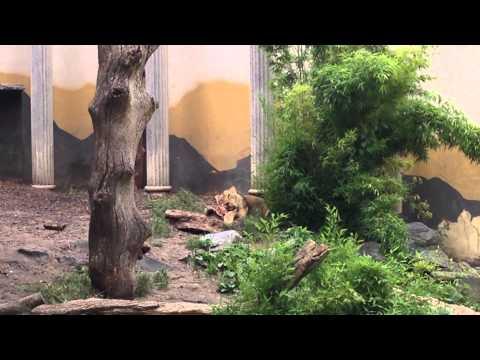 diergaarde blijdorp leeuwen etenstijd