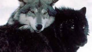 Wolf Love is the Love of a Lifetime! [video request]