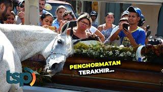 Inilah Momen Mengharukan Ketika Kuda Mengucapkan Selamat Tinggal Kepada Majikannya
