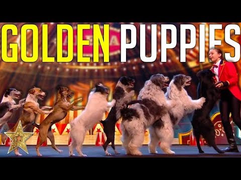 GOLDEN BUZZER Audition Is Crowned The BEST DOG ACT EVER By Simon Cowell! | Got Talent Global