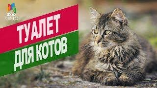 Туалет для котов | Обзор туалет для котов