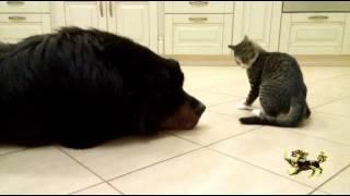 Бурят-монгольская собака. Хотошо Семён Семёныч - железные нервы)