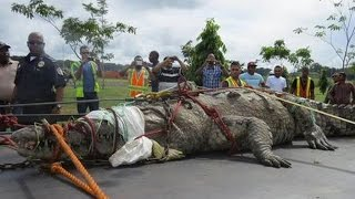 Top 10 Largest Crocodiles Ever Caught