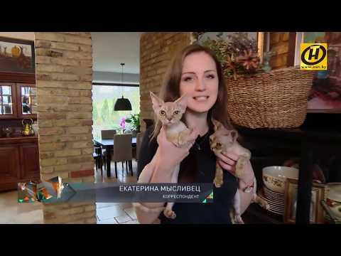 Вопрос: Почему заметно у семейства кошачьих, что они умываются?