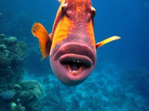 картинки смешные рыбки