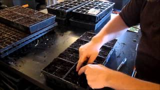 Planting herbs from seeds Cilantro, Basil, Sage, Dill, Scallion, and Mint