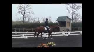 Regal Jewel II - 2010 15.3hh Oldenburg cross mare