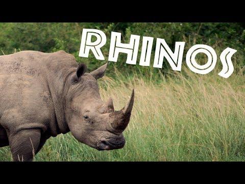 All About Rhinos for Kids: Rhinoceros for Children - FreeSchool