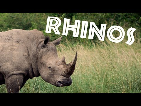 All About Rhinos for Kids: Rhinoceros for Children - FreeSchool