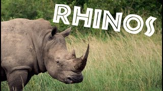 Download All About Rhinos for Kids: Rhinoceros for Children - FreeSchool