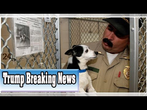 California Today: Should Shelter Dogs Be Vegan?| Trump Breaking News