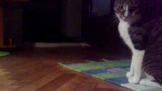 "Video Ricky ""Mos"" Martin si Grigore, the perfect cat! download MP3, 3GP, MP4, WEBM, AVI, FLV Desember 2017"